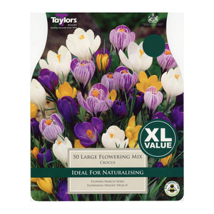 Taylors Large Flowering Mixed Crocus (50)